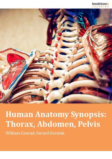 Human Anatomy Synopsis: Thorax, Abdomen, Pelvis